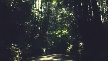 [PV] Utada Hikaru - Sakura Nagashi
